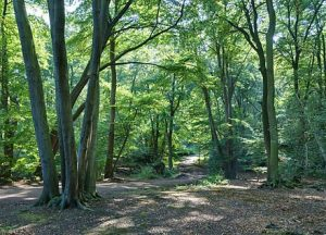 Epping Forest, the Essex Borders