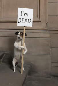 David Shrigley, Dead Dog